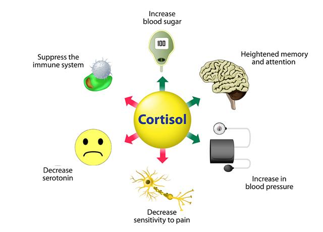 Kortisool