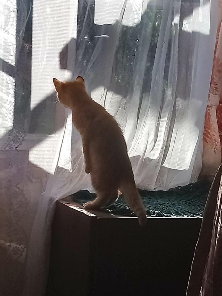 273783ef8bb ... lase kellelgi magada. Või istuvad kahekesi ninad vastamisi- vana kass  aknalaual, kust lilled suveks õue läksid, ja kassipoeg tühjal postamendil.